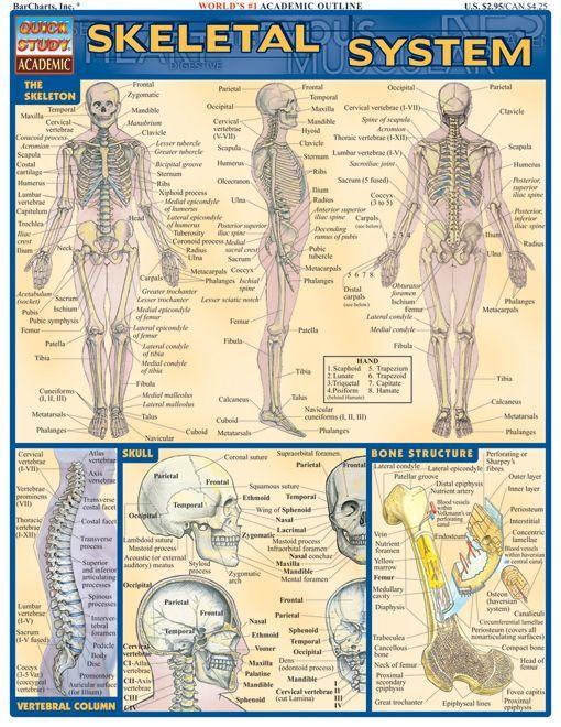 137 best bones images on Pinterest | Human anatomy, Skeletal ...