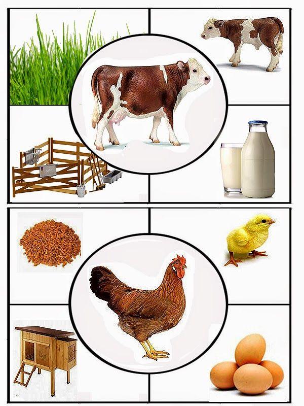 zvířata - bydlí, jí a produkují 1
