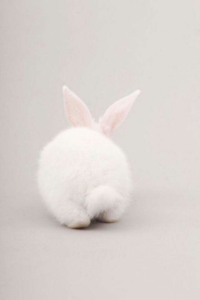 Follow the white rabbit buns!