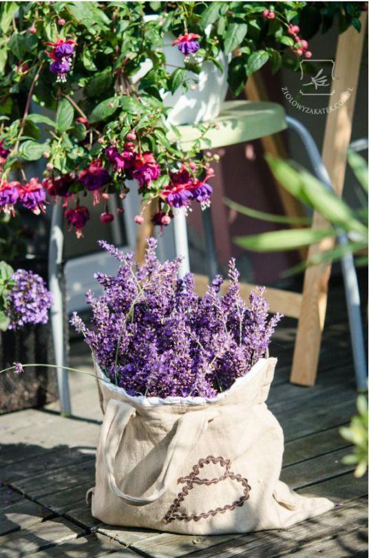 Lavender and Fuchsias
