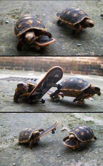 Turtles on skateboards...couldn't get any cooler THOSE ARE MINI TURTLES ON TECH DECKS!!!! ERMERGERD!!!!