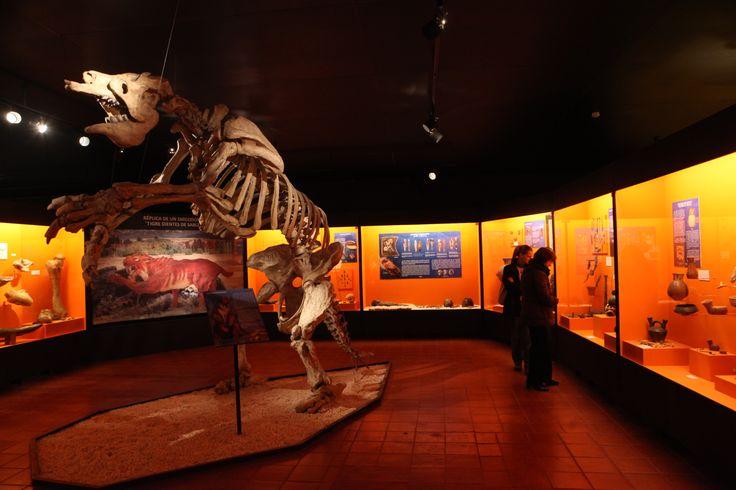 Sala de Paleontología del Museo de Colchagua, en Santa Cruz.