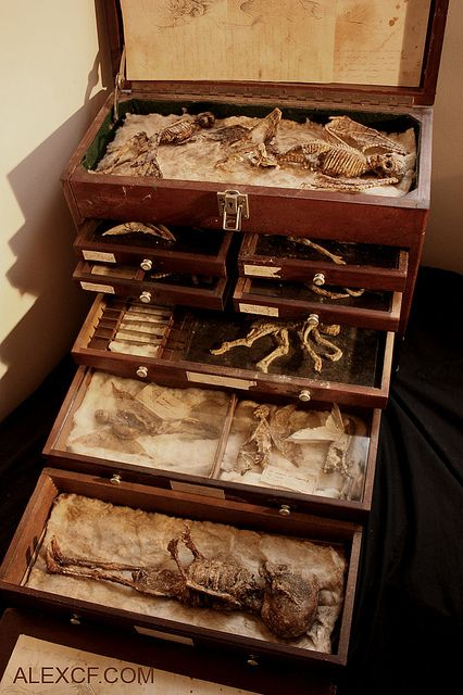 The specimens of Alex CF » On Nymphs, Draiads and Elves