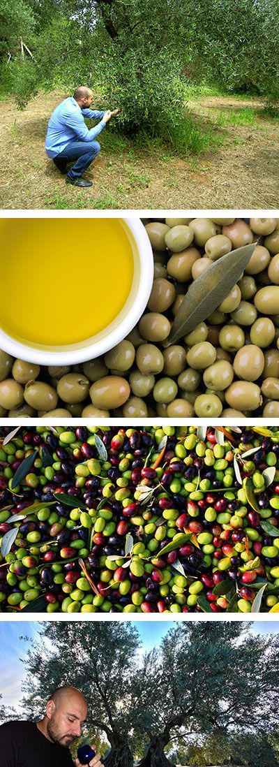 Olive Oil Extra Virgin was founded in 2014 by Valentinos Varelas. Is a United Kingdom based business company that imports premium olive oils. We are obsessed and focused to find the most delicious olive oil across Greece and then feed them to you.