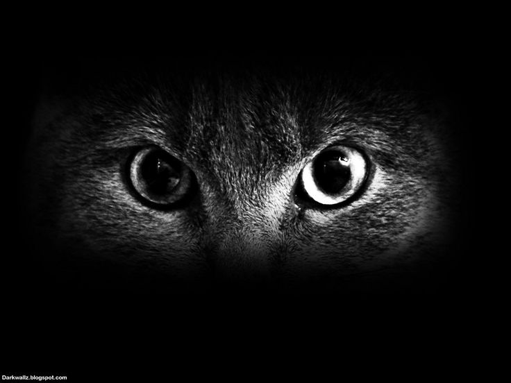 Black Cat With Pink Scary Eyes: Scary Eyes Wallpapers 23