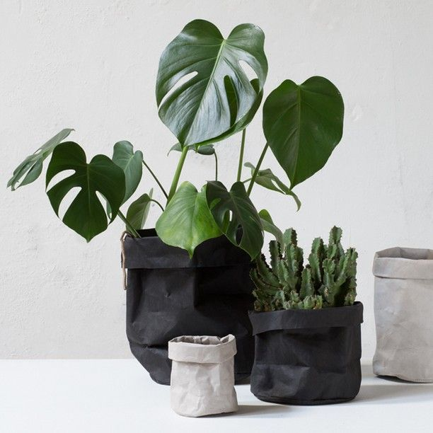 """It's really easy to style your house plants in this trendy fashion,"" Anna says. In shops now. Paper bags, prices from DKK 14,90 / SEK 19,90 / NOK 21,90 / EUR 1,98 / GBP 1.92 / ISK 409"