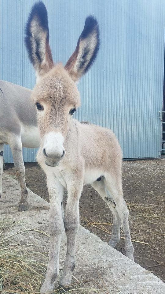 T&D Donkey Rescue ~ Look at this boy! Cuteness overload ❤️