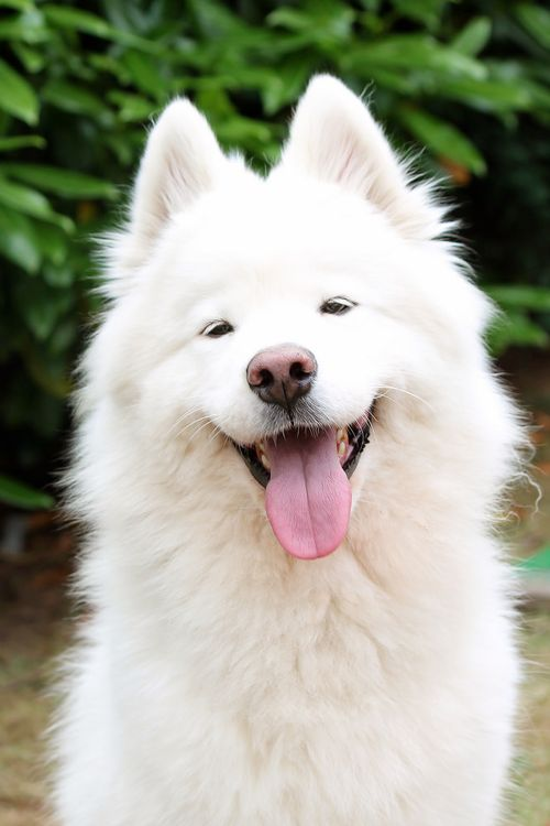 What Makes Dogs Happy