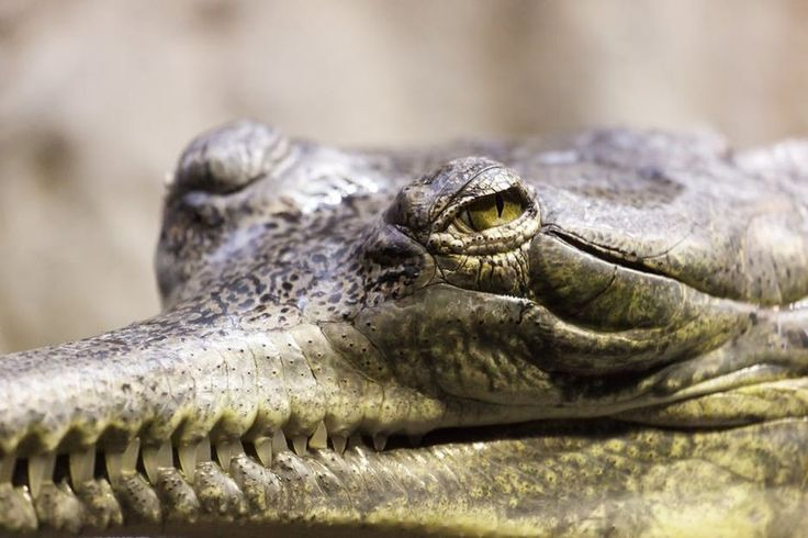 49 best Crocodile images