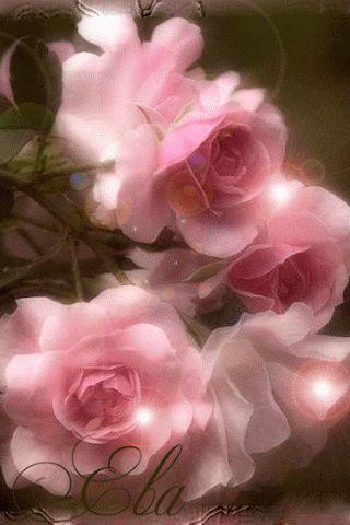 Decent Image Scraps: Rose Animation