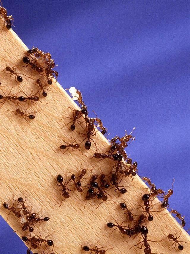 Las hormigas no duermen.