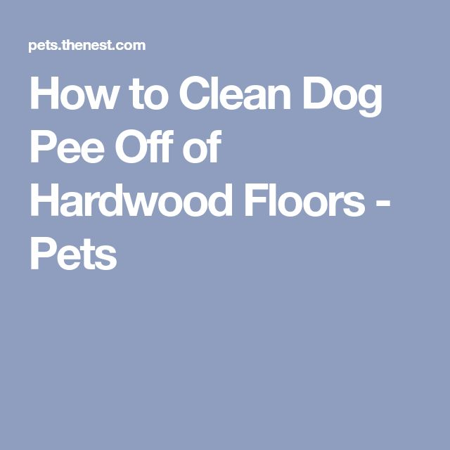 How to Clean Dog Pee Off of Hardwood Floors - Pets