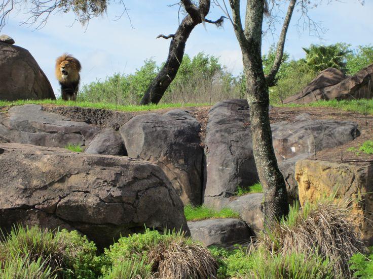 Animal Kingdom, Disneyworld - FL