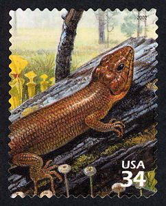 Brownhead Skink and Yellow Pitcher Plants, a US .34¢ stamp issued April 26, 2002