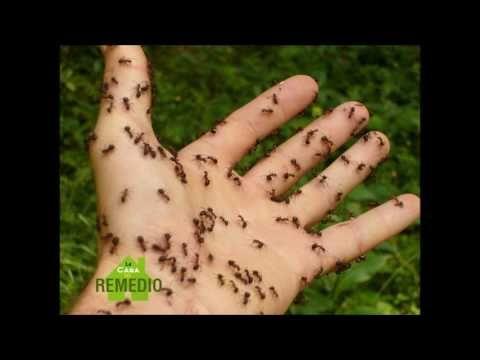mejores 20 imagenes de para eliminar insectos en pinterest