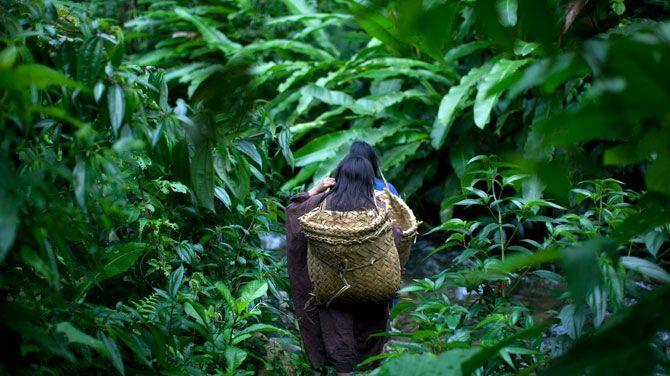Indiaanse vrouwen verwerpen de beschaving en keren terug naar de jungle