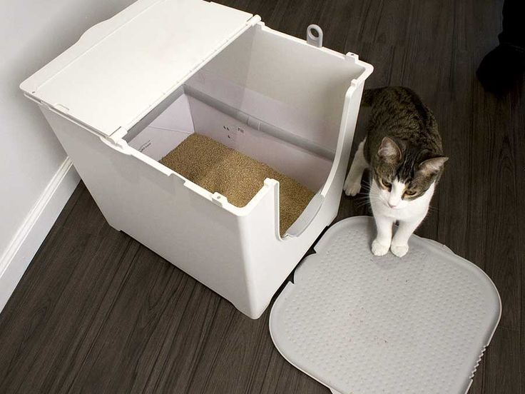 Cat going in the Flip Cat Litter Box : litter box on carpet - Aboutintivar.Com