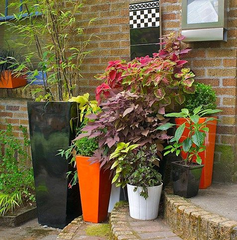 451 Best Patio And Container Gardening Images On