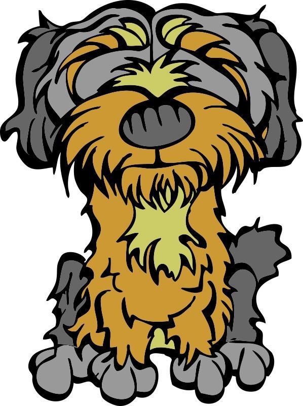 Shorkie Tzu  (Shih Tzu  x  Yorkshire Terrier)