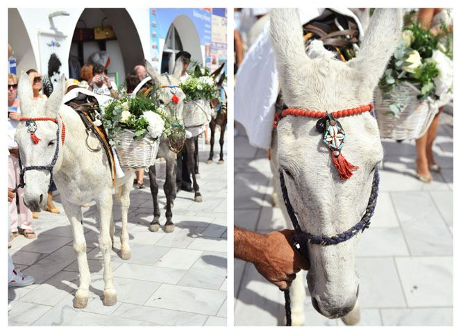 Donkeys  www.andreaandmarcus.com & www.xoandrea.com