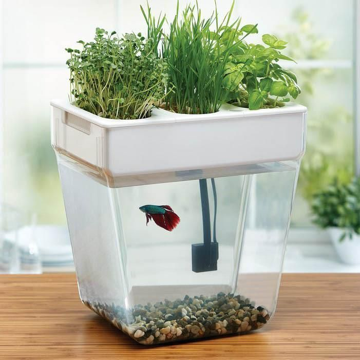 Best 25 3 Gallon Fish Tank Ideas On Pinterest 1 Gallon Fish Tank Betta Tank And Aquarium