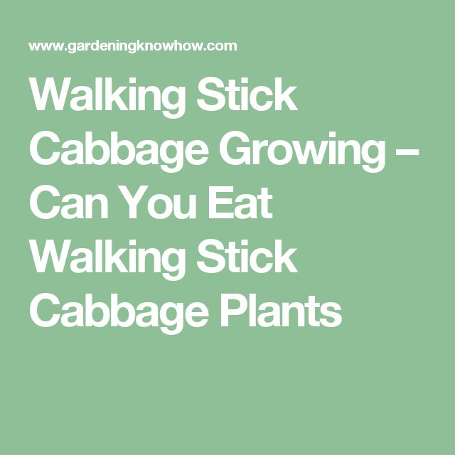 Walking Stick Cabbage Growing – Can You Eat Walking Stick Cabbage Plants