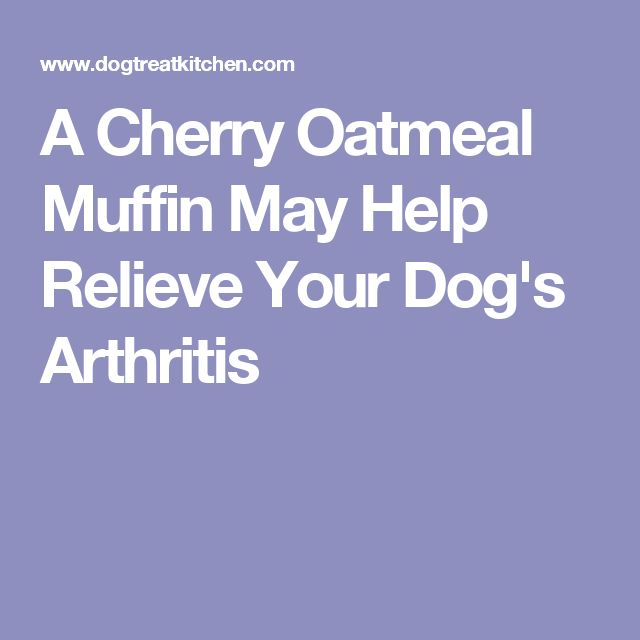 A Cherry Oatmeal Muffin May Help Relieve Your Dog's Arthritis