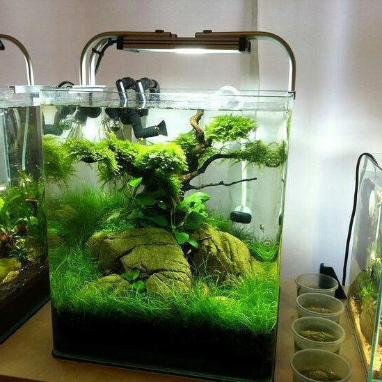 best 25 nano aquarium ideas on pinterest nano tank. Black Bedroom Furniture Sets. Home Design Ideas
