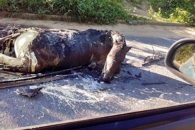 #LEIAMAIS WWW.OBSERVADORINDEPENDENTE.COM SIMÕES FILHO: Cavalo é queimado vivo