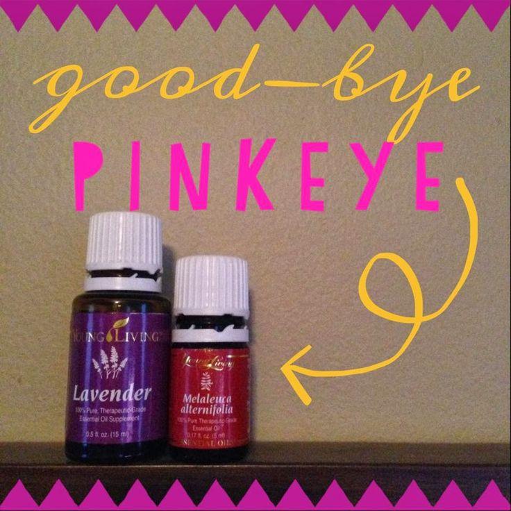 Young living essential oils for pinkeye. No more horrible eye drops!! Lavender, Melaleuca Alternifolia. Young Living distributor 1352249 #youngliving #pinkeye