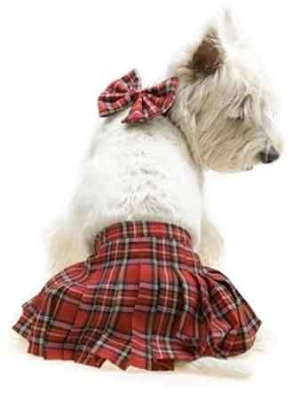 Tartan Dog Collars For Westies