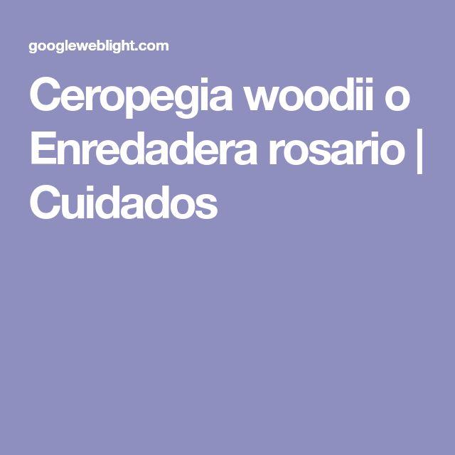Ceropegia woodii o Enredadera rosario | Cuidados