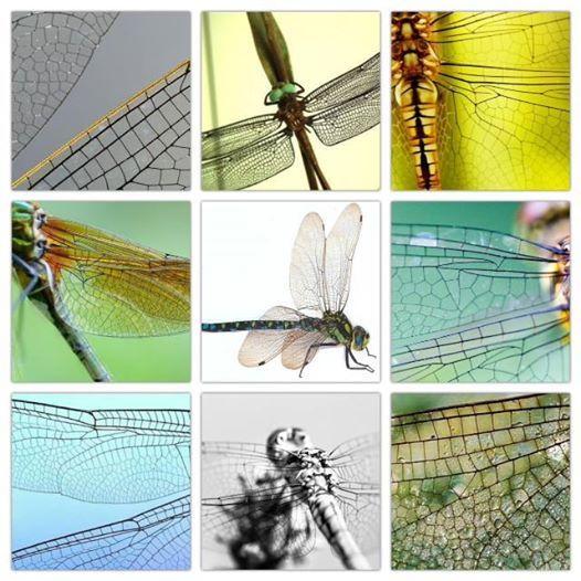 Kunst- en vliegwerk- De vleugels van de libel De vleugels van de libel zijn een waar grafische kunstwerk met de eigenschappen van vliegtuigvleugels. Geen wonder dat ze zo vaak als studiemateriaal en inspiratie hebben gediend.
