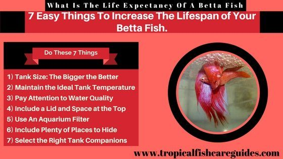 270 best betta fish images on pinterest beta fish for How to care for a betta fish