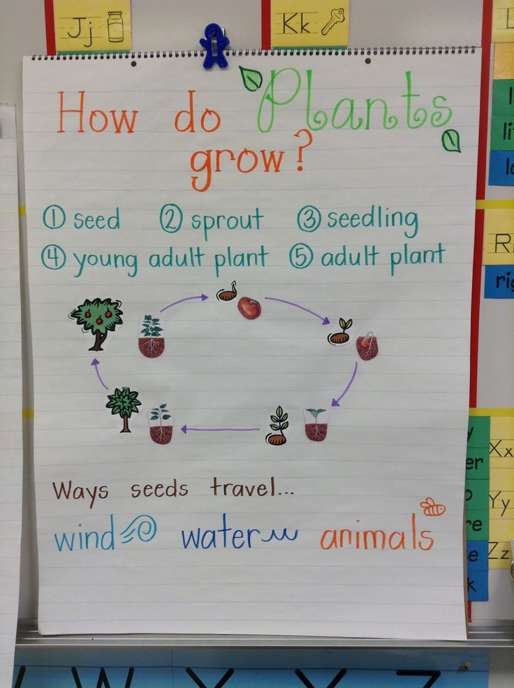 Plant Life Cycle | Science Anchor Chart | Pinterest