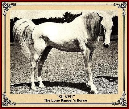 SILVER the Lone Rangers Horse ~ The 1st of 2 Silvers was a 12 yr old Morgan/Arabian, 17+ hh, Gentle, didn't do any tricks at all. All the Clayton Moore standing stills are with this horse. SILVER 2 - Arab/Saddlebred, not as tall as original, but trained by same trainer that trained Trigger. Could only be ridden by his owner-trainer as he was very wild, jittery and jumpy. Clayton Moore never rode him.  Every action scene was done by the owner-trainer in Moore's costume. Moore did not own a…