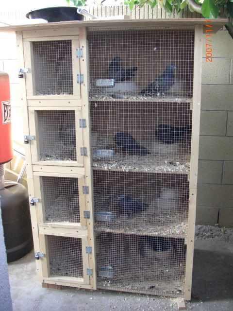 pigeon breeding cages - Google Search