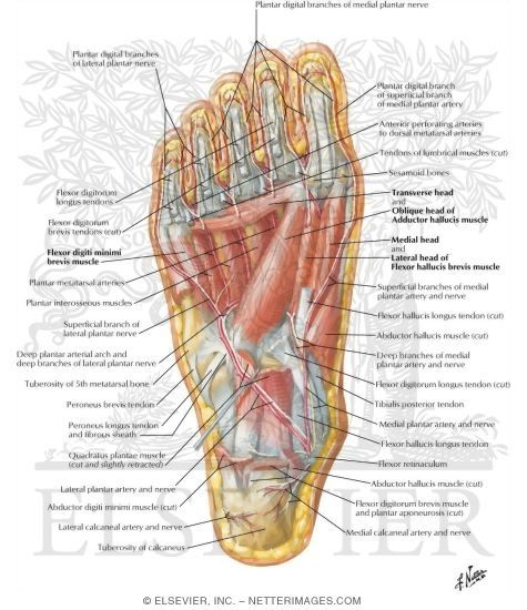 Anatomy of bottom foot pictures