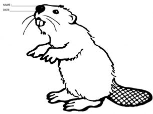 Try These Fun Free Printable Beaver Coloring Sheets