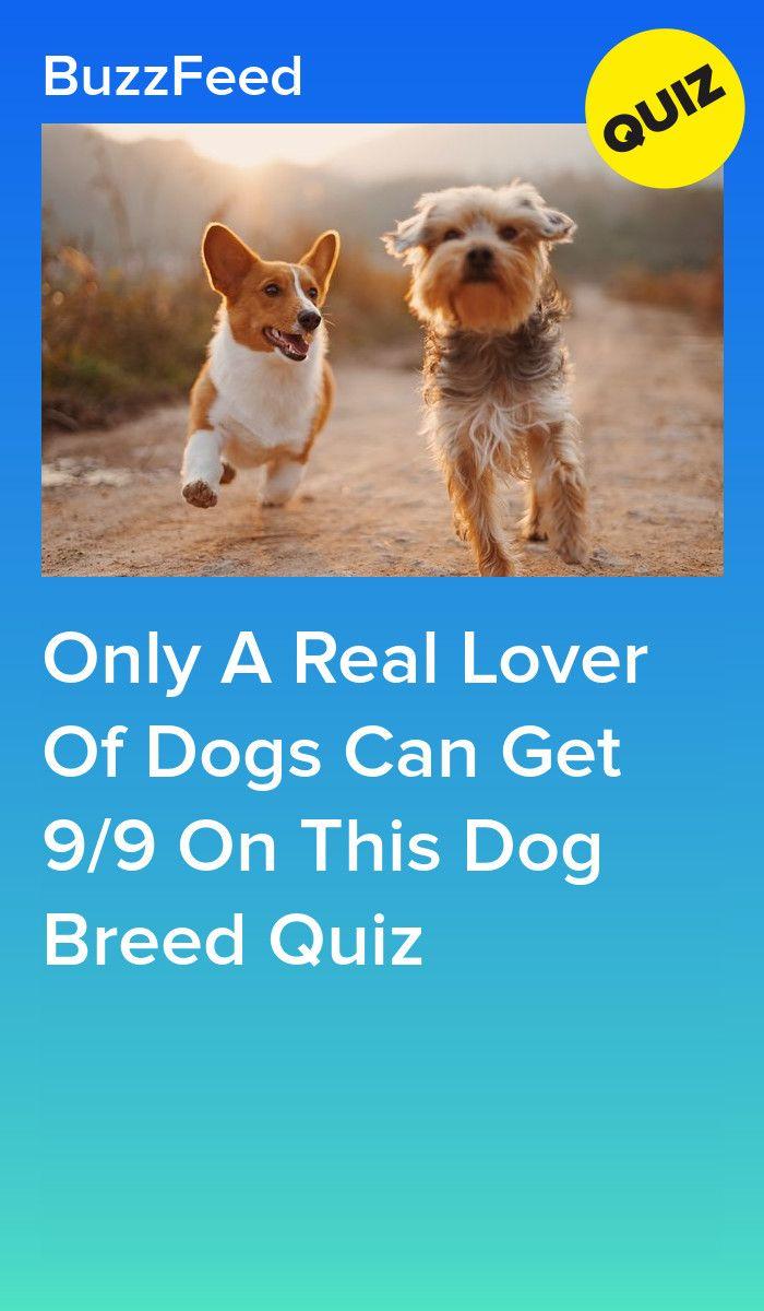Dog Breed Selector Puppy Finder Choosing A Dog Dog Breed Selector Dogs Purebred Dogs