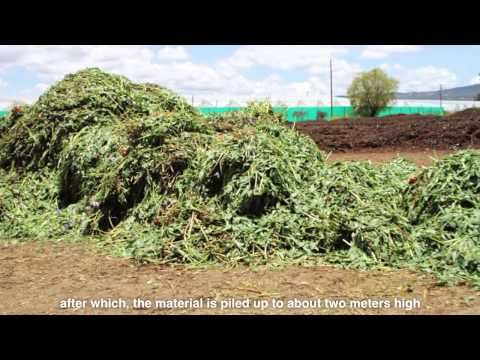 Compost at a glance: Hugo explains why it is important to flowers production
