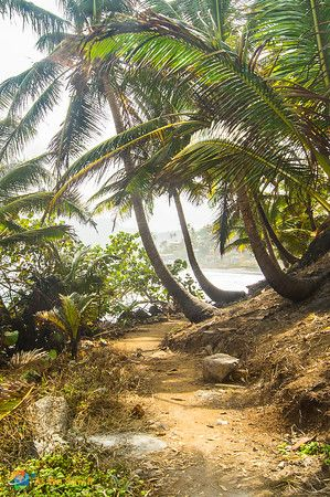 A beautiful path on Isla Grande, Panama