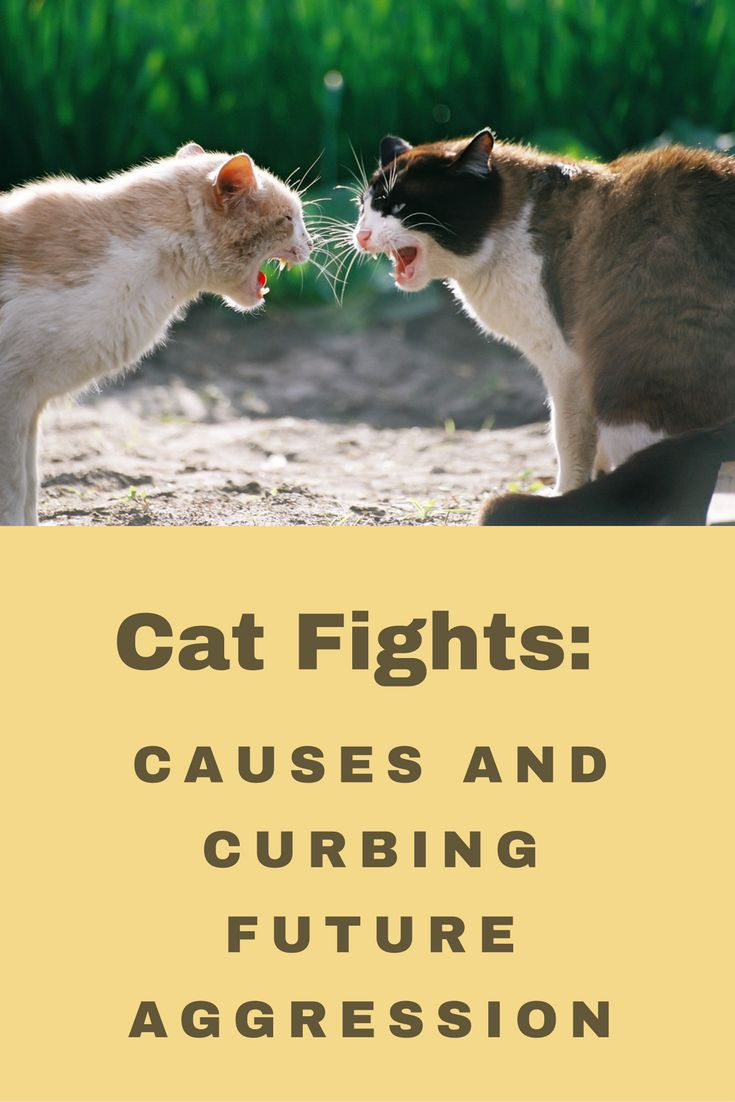 The 25 best Cats fighting ideas on Pinterest