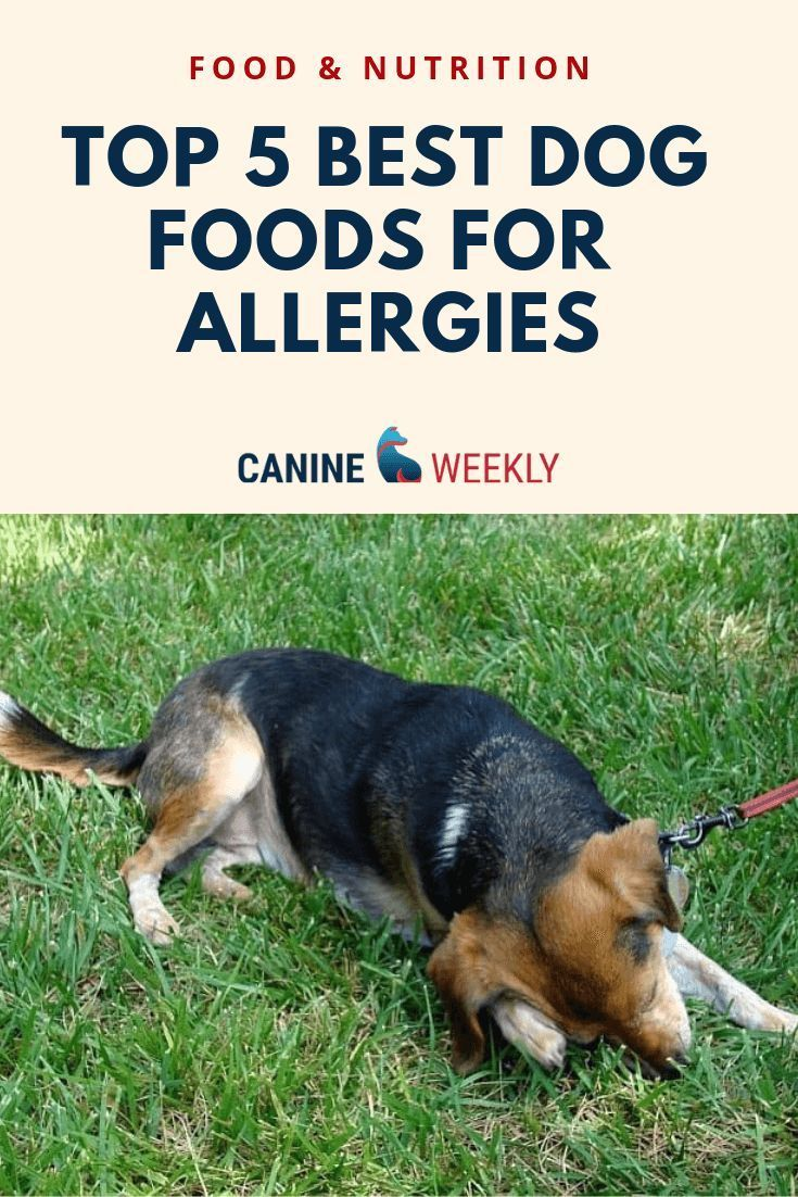Best Hypoallergenic Dog Food In 2019 Reviews And Guide In 2020 Best Hypoallergenic Dogs Hypoallergenic Dog Food Dog Allergies