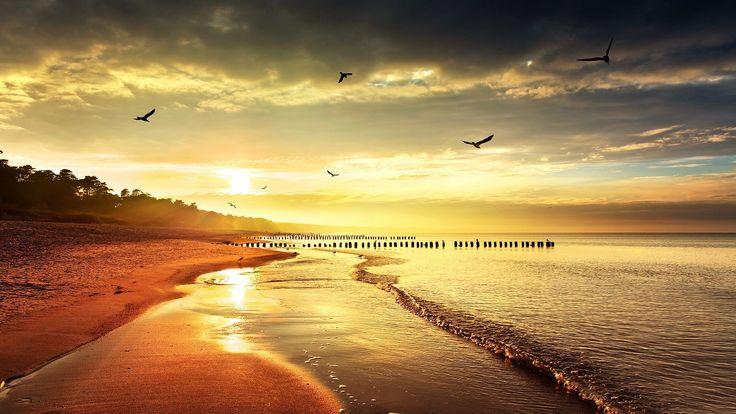 Download Wallpaper 1920X1080 Sea , Beach, Nature, Birds -6249