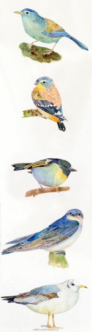 watercolor birds by carter flynn