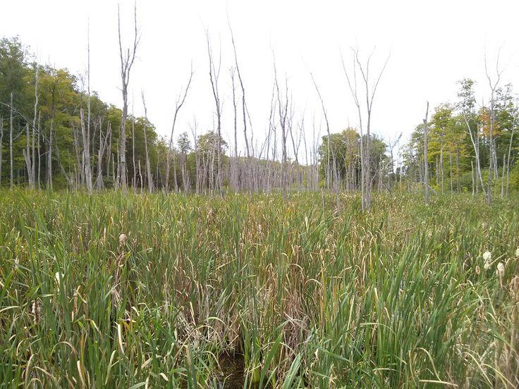 Dead trees in water. *** Arbres morts dans l'eau.