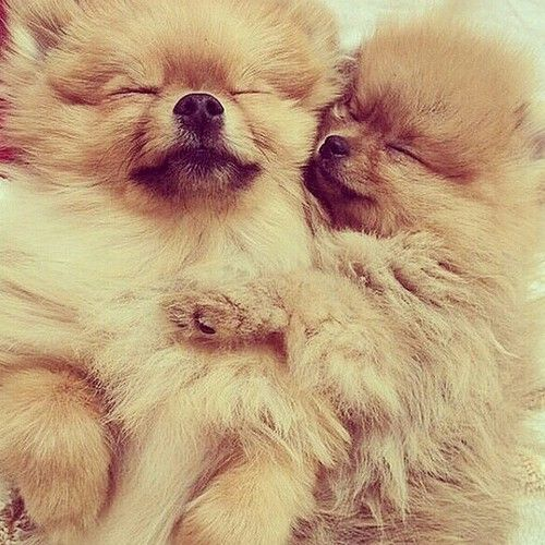 I love cinnamon poms. Two would always be better than one.