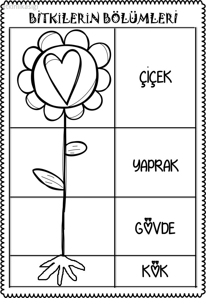 bitkilerin bölümleri