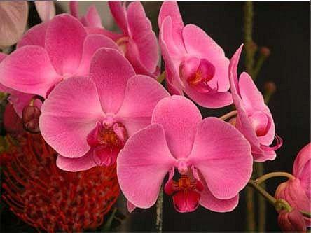 Záhrada a príroda - Pestovanie - Pestovanie orchidey